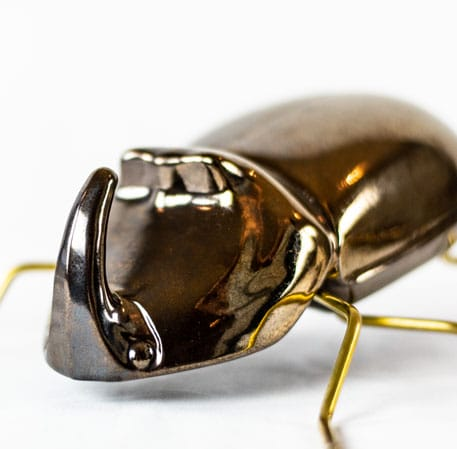 Mambo Deko-Figur Nashornkäfer Gold Messing Deko Dekoration Keramik Detail